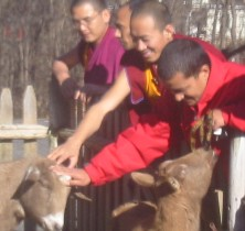 Monks Petting Goats at The Peace Abbey